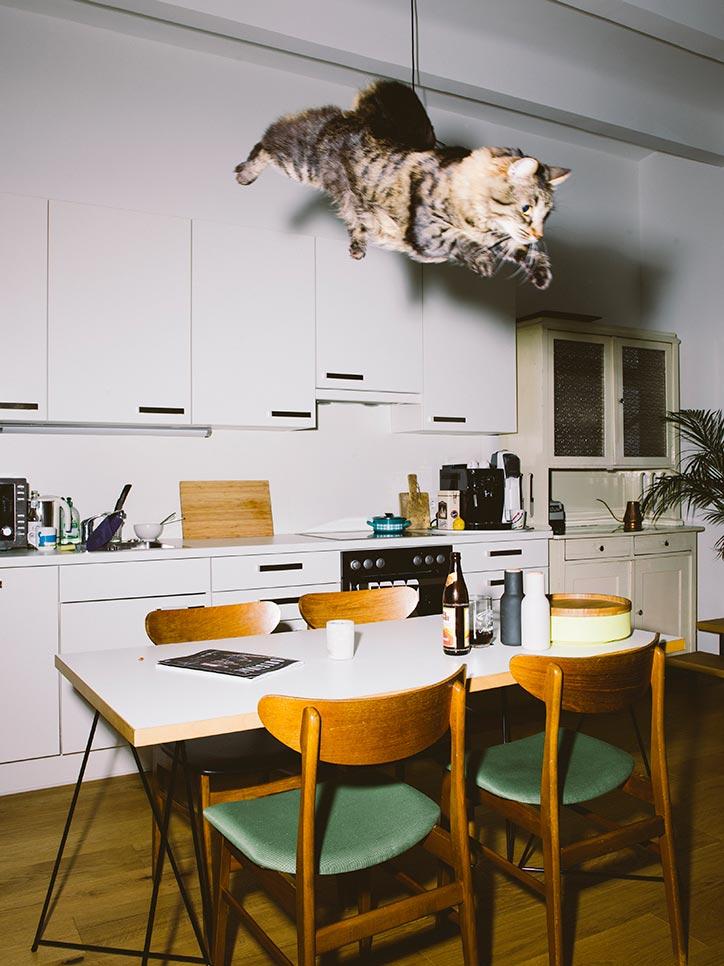 01-header-cats2