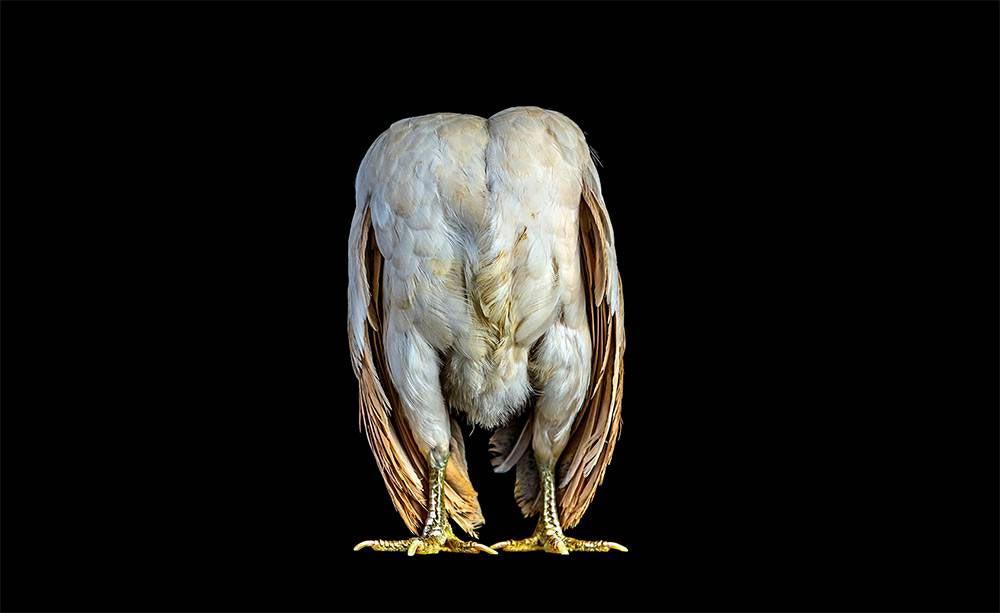 Ernest-Goh-Chicken06
