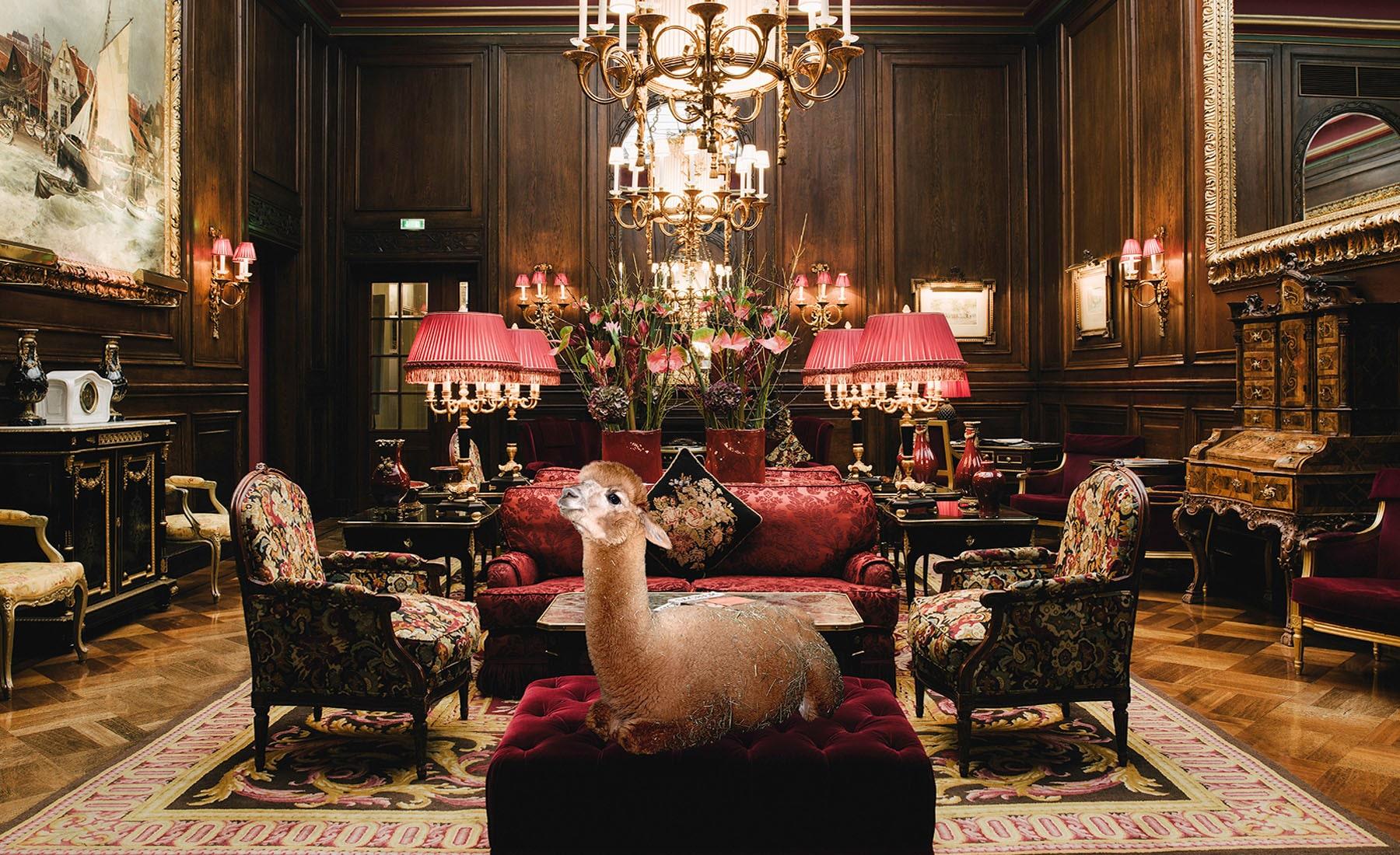 Daniel-Gebhardt-de-Koekkoek-Alpaca-Calendar-Living-Room