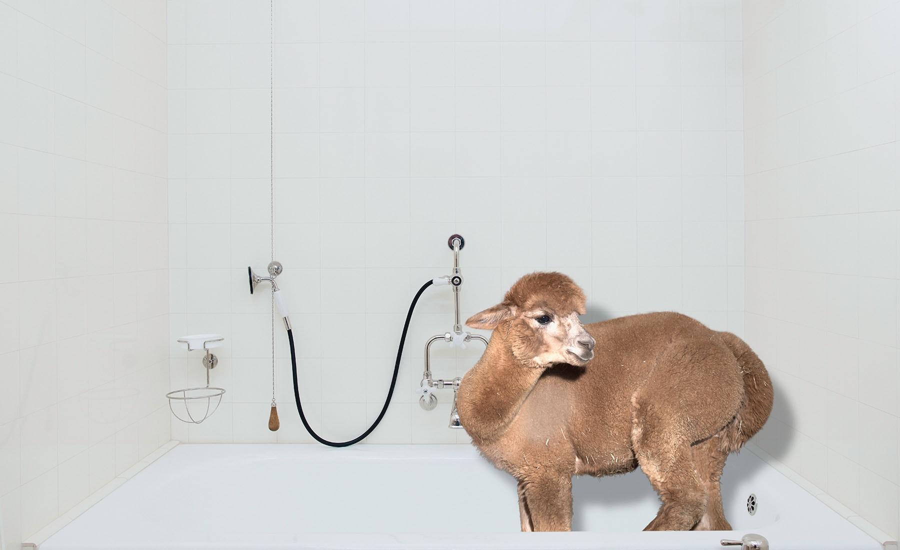 Daniel-Gebhardt-de-Koekkoek-Alpaca-bath-tub