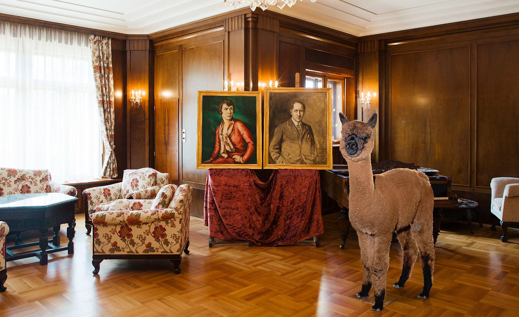 Daniel-Gebhardt-de-Koekkoek-Alpaca-portraits